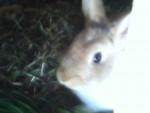 Camile - Rabbit (7 months)