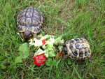 Mes tortues - (3 years)